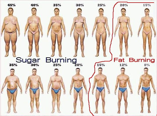 body_fat_percentage_540