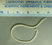 roundworm_ruler